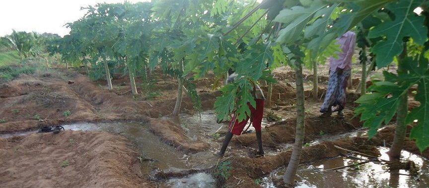Farming sector improvement